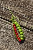 Groene erwten en rode aalbessen. — Stockfoto