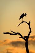 Heron at Sunset — Stock Photo