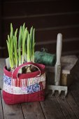 Spring narcissus bulbs in handmade patchwork bag and garden rustic tool on wooden table — Stock Photo
