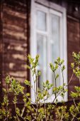 First green leaves with wooden house on background in spring garden — Stock Photo