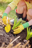 Child girl in yellow and green rubber gloves planting hyacinth bulbs in spring garden — Stock Photo