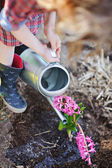 Child girl in plaid dress and rubber boots watering hyacinth flowers in spring garden — Stock Photo