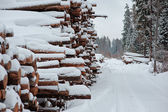 Winter snowy road in the forest with tree felling — Stock Photo