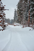 Snowy road in winter forest with tree felling — Stock Photo