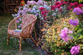 Chair in summer garden with blooming phlox flowers — Stock Photo