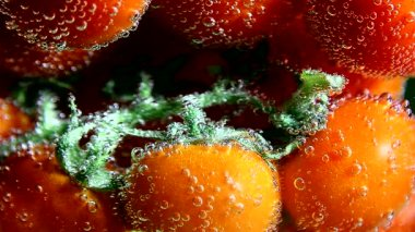 Vegetables. Twig of tomatoes in water with bubbles — Vídeo de stock