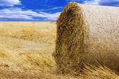 Hay-roll hasat sonra sahada Vintage Fotoğraf — Stok fotoğraf