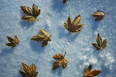 Last year's leaves in the snow — Stock Photo