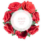 Roses, isolated — Stock Photo