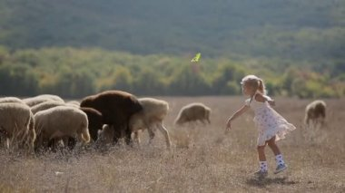 Carefree little girl throws meal to sheep grazing in the meadow — Stock Video