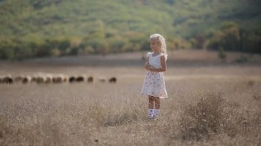 Pleased little girl runs across the meadow where sheep grazed — Stock Video