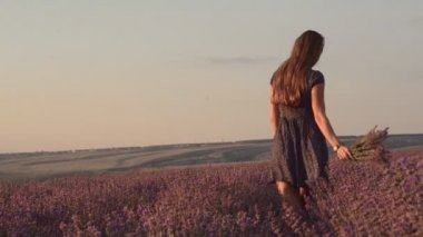 Slim girl in a sundress with a bouquet of lavender is walking on the blossoming field of lavender — Stock Video