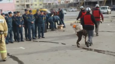 Sevastopol, Crimea, Russia - March 26, 2015: Military exercises. Rescuers and police work with service dogs — Stock Video