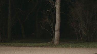 Beautiful girl runs away from maniac through the dark park — Stock Video