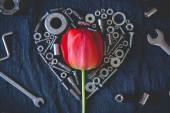Tulipan otoczony orzechy — Zdjęcie stockowe