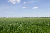 Campo verde y cielo azul con nubes de luz — Foto de Stock