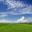 Beautiful green paddy terraces under bright blue sky with clowds — Stock Photo #76446293