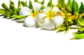 Układania kwiatów. — Zdjęcie stockowe