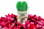Green Heart, Red Roses — Foto Stock