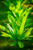 Green Leafed Plant — Stock Photo