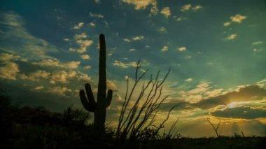 Saguaro Cactus Sunset — Stock Video