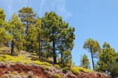 El teide national park (Tenerife) — Stock Photo