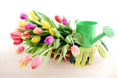 Bunch of Tulips on a basket with gardening tools — Stock Photo