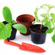 Zucchini and tomato plant seedlings on white background — Stock Photo #67243723
