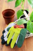 Gardening utensils with seedlings of paprika and zucchini — Stock Photo