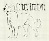 Vektör çizim golden retriever — Stok Vektör