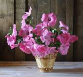 A still life with pink flowers — Stock Photo