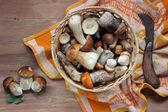 A still life with mushrooms. — Stock Photo