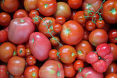 A background from tomatoes. — Stock Photo