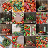 Collage from still lifes with cucumbers and tomatoes. — Stock Photo