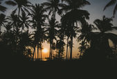 Palm silhouettes at sunset — Stock Photo