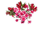 Pink carnation and iris flowers isolated on white — Stock Photo