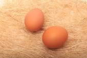 Golden egg in a makeshift nest. On a white background. — Stock Photo