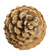 Pine cone top view isolated on white — Stock Photo #61414315