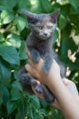 在女人手在绿色背景中的灰色小小猫. — 图库照片