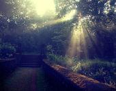 Sun beams thorough trees and greens — Stock Photo