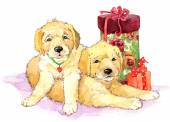 Birthday background for kid congratulation and card with funny puppy — Stok fotoğraf