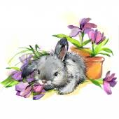Valentine day. Funny bunny. background for congratulations. wate — Stock Photo