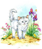 Funny white cat — Stock Photo