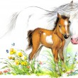 Watercolor horse mom and baby — Stock Photo #70554721