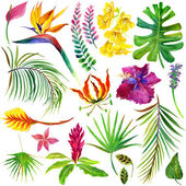 Tropical leaves and exotic flower. — Stock Photo