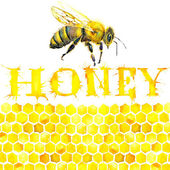 Honey, honeycomb, sweet bee. — Stock Photo