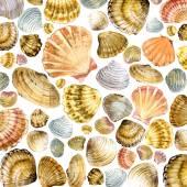 Sea shell watercolor — Stock Photo