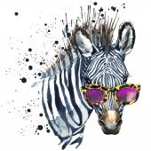 Funny zebra watercolor illustration — Stock Photo