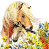 Horse and foal with meadow flowers. watercolor — Stock Photo