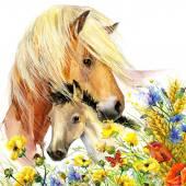 Paard en veulen met weide bloemen. Aquarel — Stockfoto